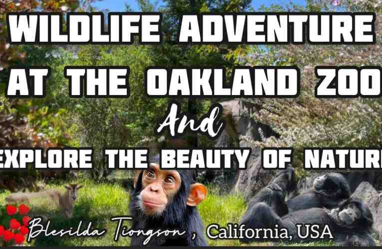 Oakland News Online Links From Oakland's Only News Aggregator Blog
